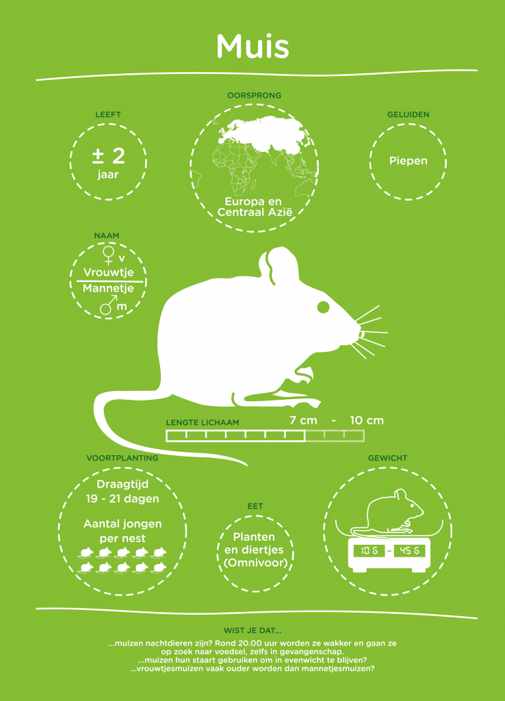 Een van de infographics gaat over de muis.
