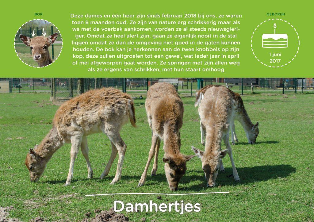 Ook de damhertjes hebben hun eigen infographic.