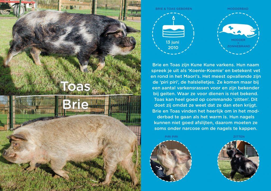 Kinderboerderij Horsterpark persoonlijke infographic