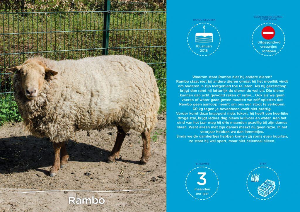 Kinderboerderij Horsterpark, persoonlijke infographic van de schapen ram.