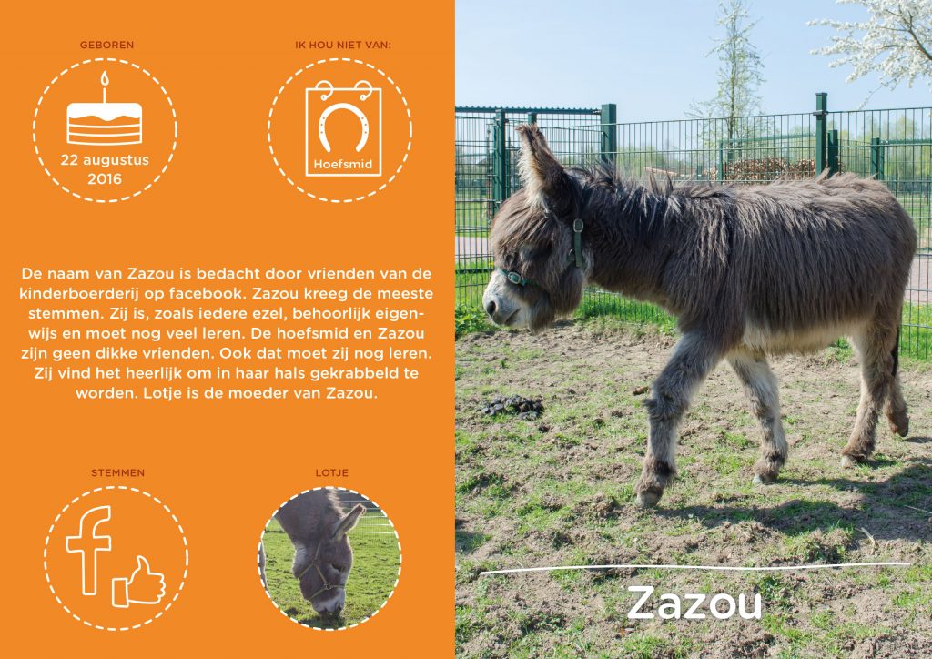 Kinderboerderij Horsterpark, infographic Ezel