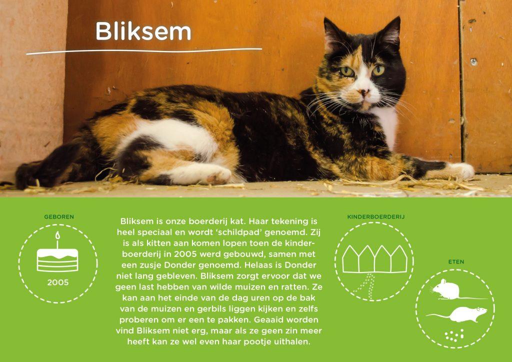 Persoonlijke infographic Bliksem, kat van Kinderboerderij Horsterpark