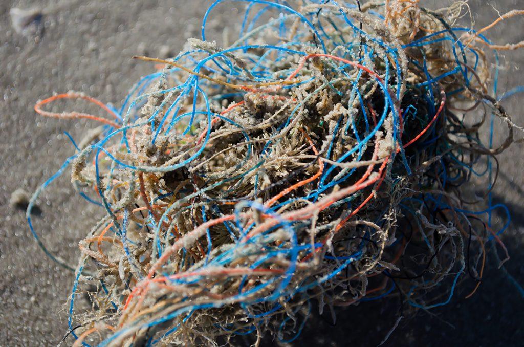 Zee-egel verstrikt tussen plastic afval.